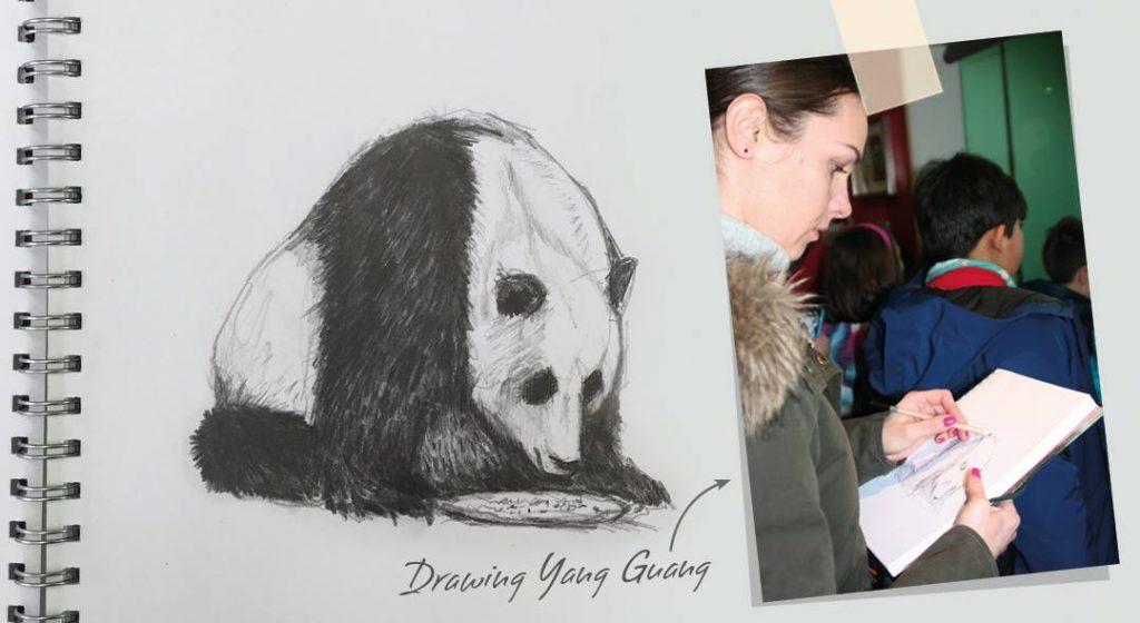 Cherith Harrison Sketch Edinburgh Zoo Panda