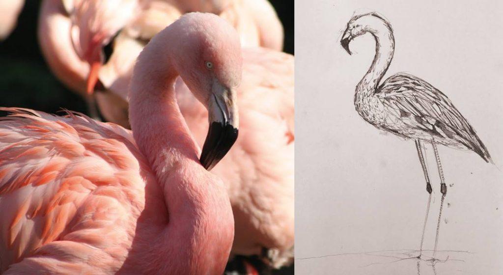 Cherith Harrison Sketch Edinburgh Zoo Flamingo