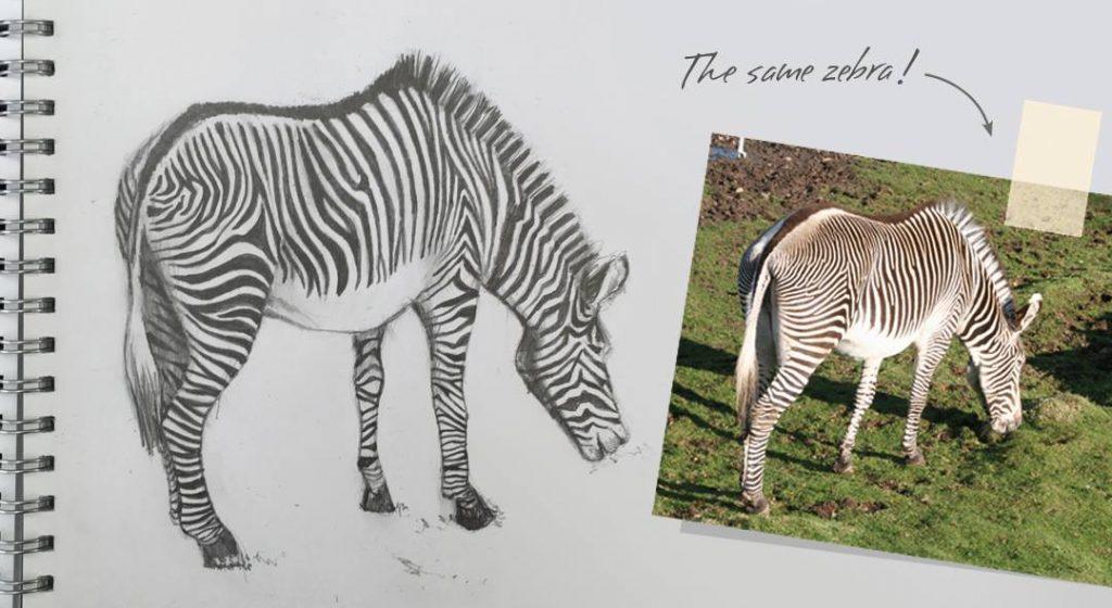 Cherith Harrison Sketch Edinburgh Zoo Zebra