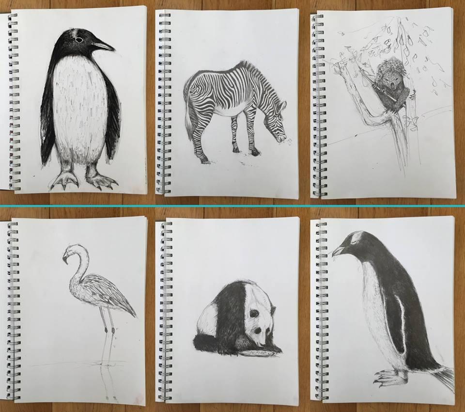 Sketches of animals at Edinburgh Zoo