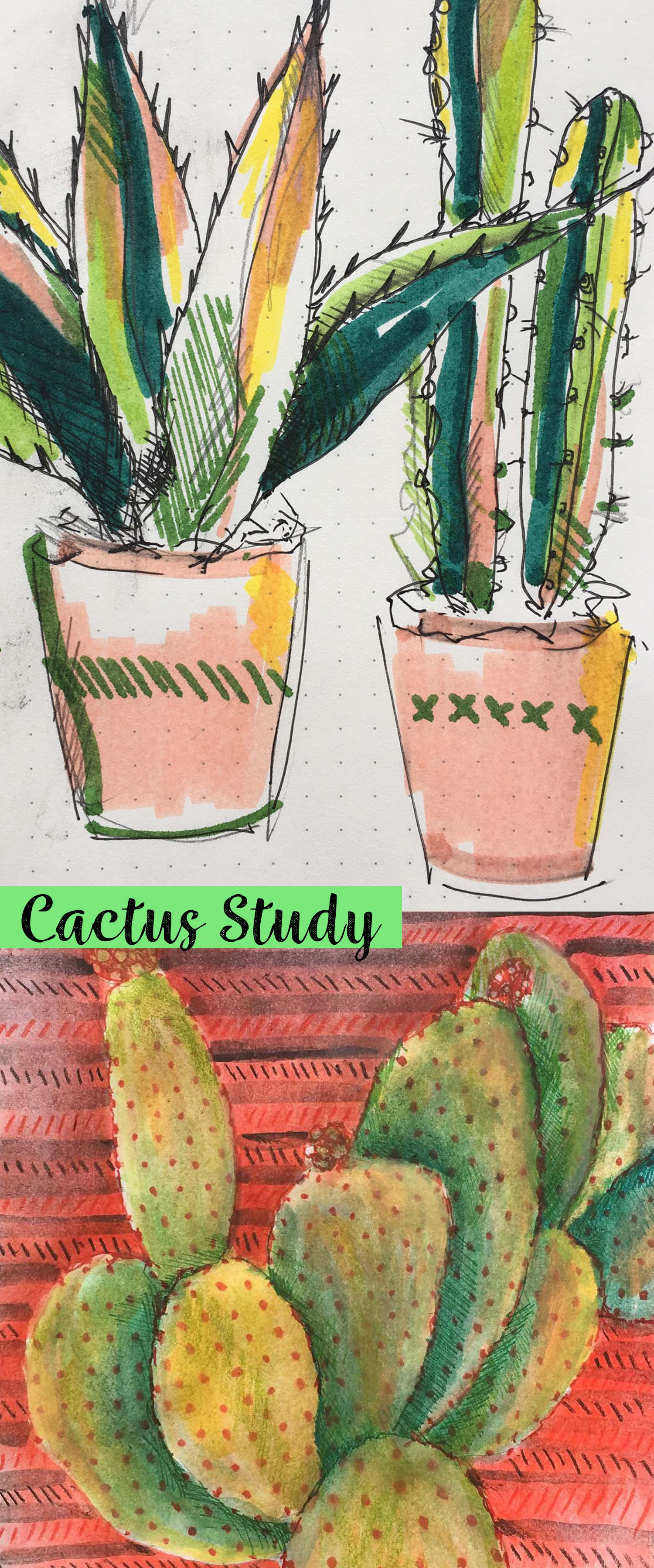 Cactus studies and drawings by Cherith Harrison