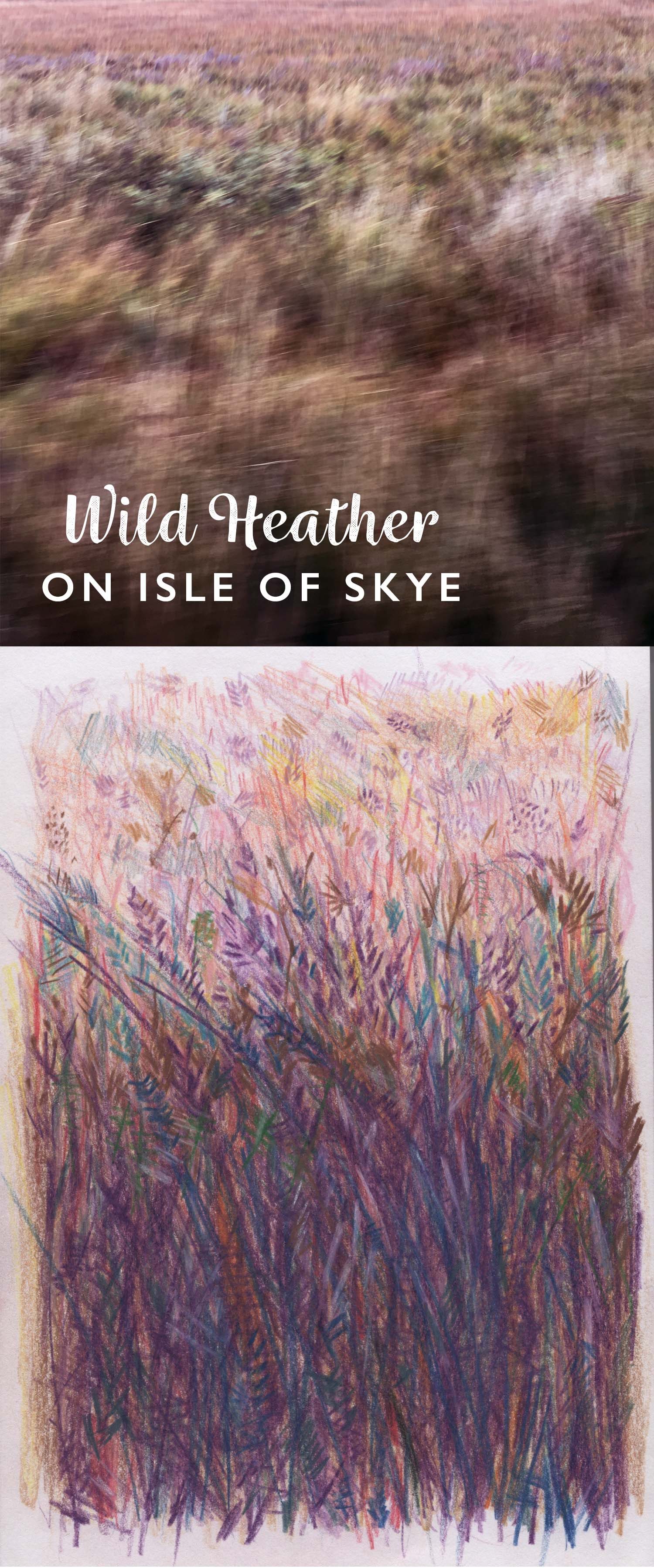 Wild heather illustration in Isle of Skye