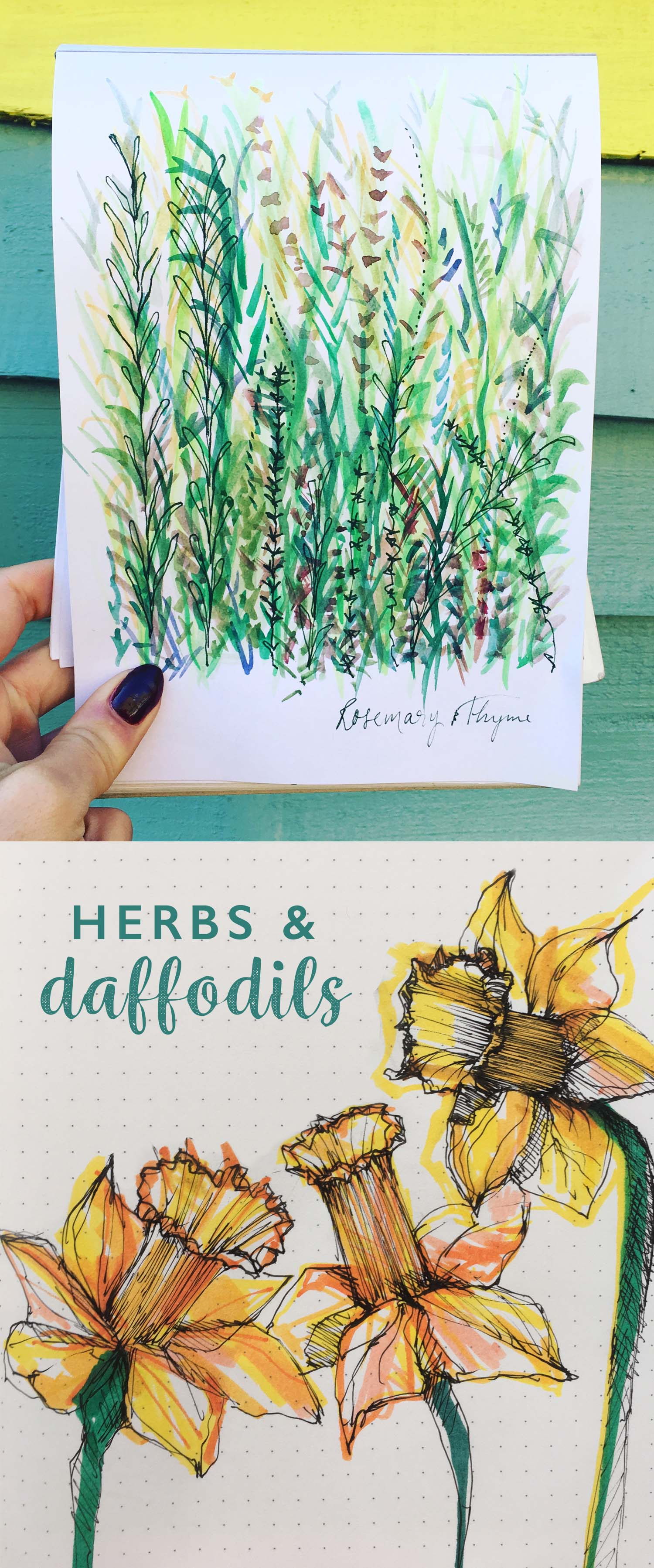 Herbs and Daffodils drawing by Cherith Harrison