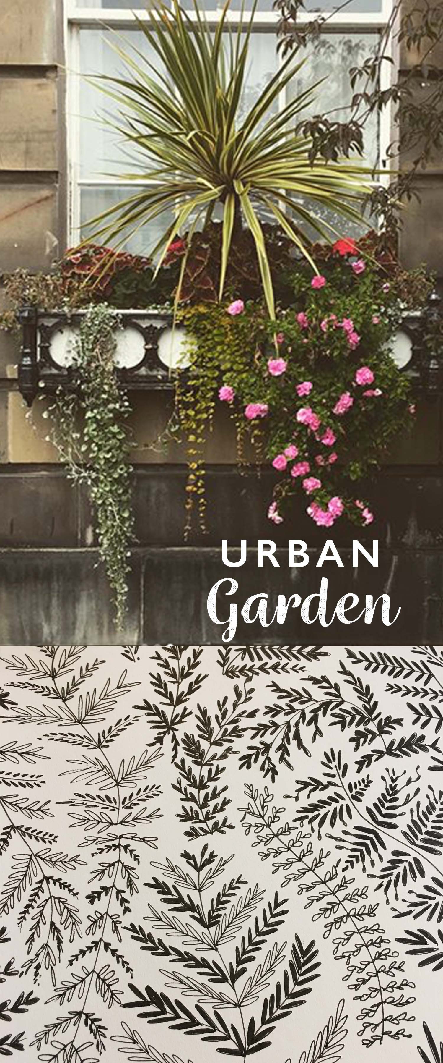 Urban gardens and botanical illustration by Cherith Harrison