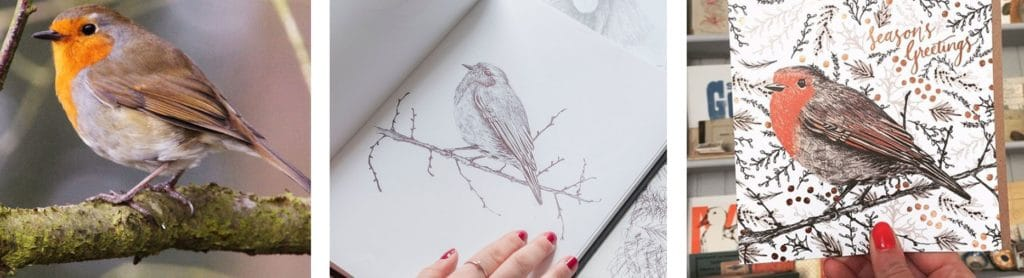 Robin srawings