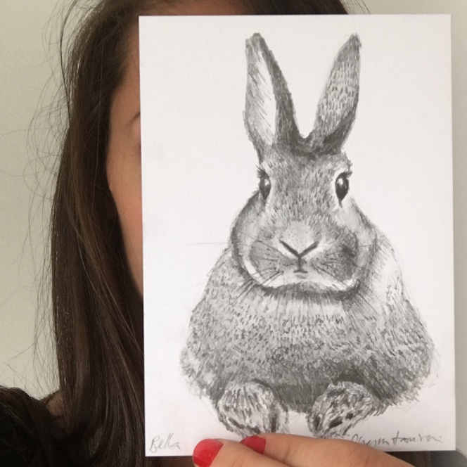 rabbit drawing by Cherith Harrison