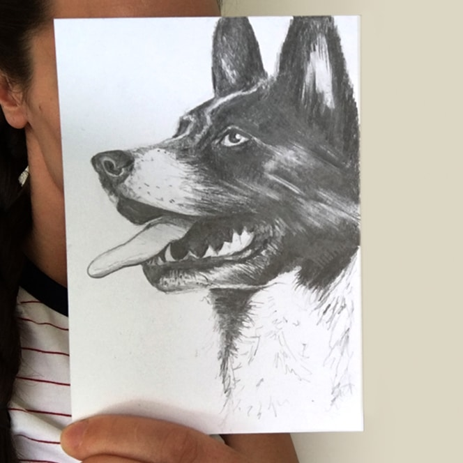 dog drawing by Cherith Harrison
