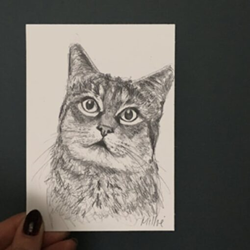 cat drawing by Cherith Harrison