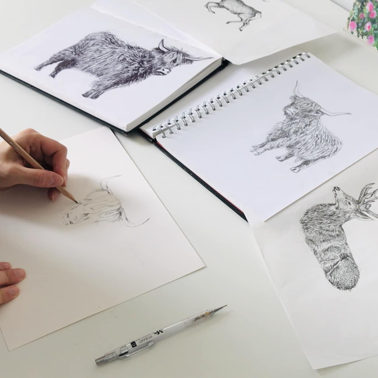 Cherith Harrison drawing a highland cow